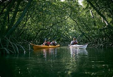 西表島マングローブカヌー