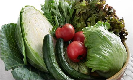 地産地消のフレッシュ野菜